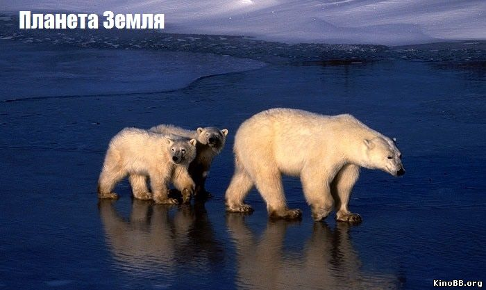 Планета Земля (сериал BBC 2006) Planet Earth